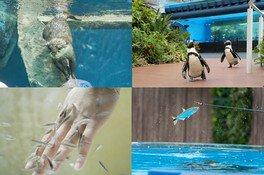 サンシャイン水族館 生き物たちのミニ運動会