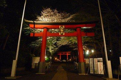大宮八幡宮の桜