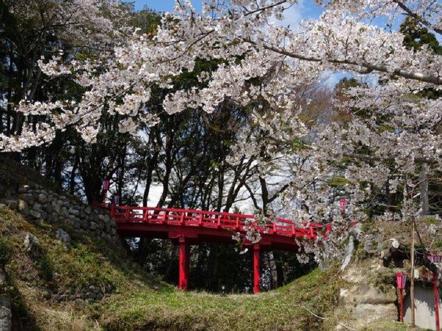 中村城跡公園 馬陵公園の桜