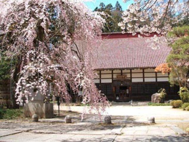 【桜・見ごろ】大隣寺