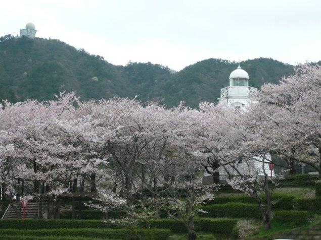 【桜・見ごろ】境台場公園
