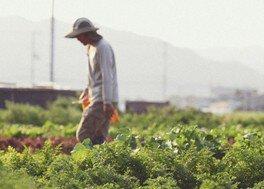 第32回生産者トーク 西洋野菜園「野菜の時間」