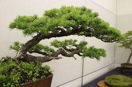 茨城県植物園 季節の盆栽展