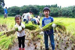 成田ゆめ牧場 まきばの稲刈り体験