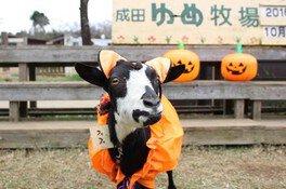 ハロウィン月間(成田ゆめ牧場)