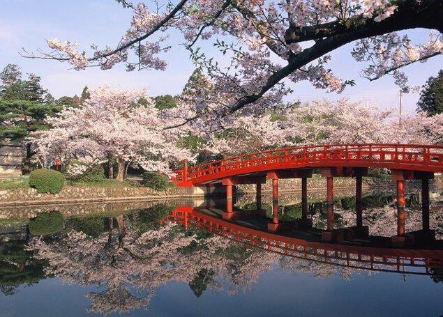 【桜・見ごろ】涼ヶ岡八幡神社