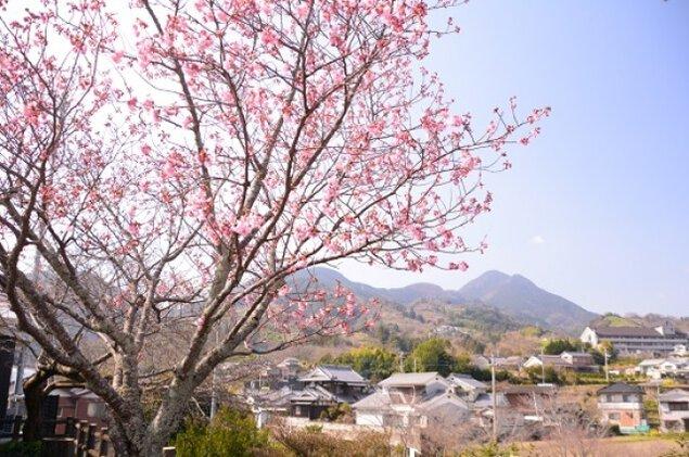 【桜・見ごろ】衝上(つきあげ)断層公園