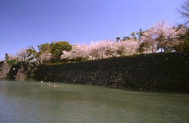 【桜・見ごろ】八代城跡