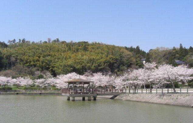 【桜・見ごろ】愛宕山公園
