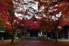 呑山観音寺の紅葉