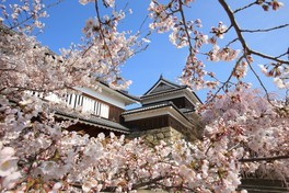 上田城跡公園の桜