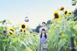 【花・見ごろ】神戸布引ハーブ園/ロープウェイ ヒマワリ