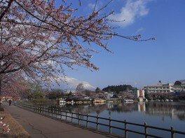 高松公園の桜