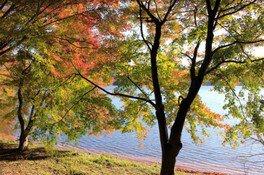 【紅葉・見ごろ】一碧湖