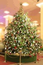 2021年 帝国ホテル 東京 クリスマスイルミネーション