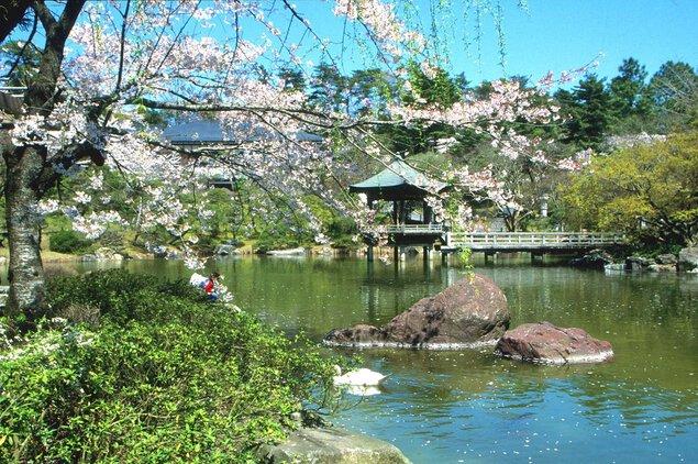 成田山公園の桜