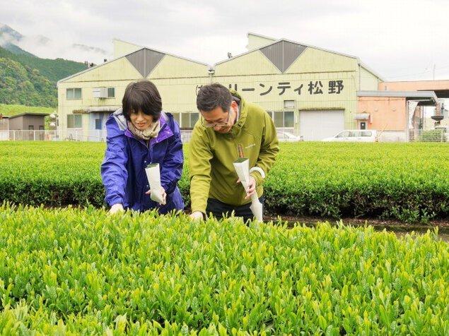 静岡・クリーンティ松野でお茶づくし体験