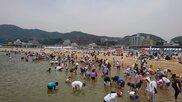 【開催中止】須磨海岸潮干狩り 2020