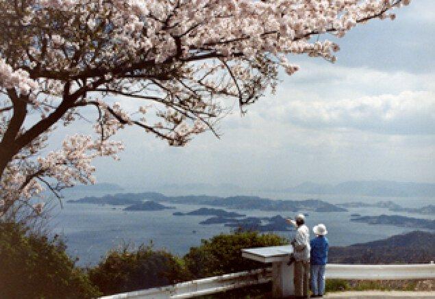 【桜・見ごろ】金甲山