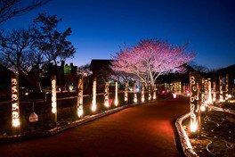 松原公園の桜