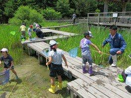 県立なか・やちよの森公園 ビオトープ池の生き物調査