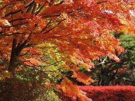 軽井沢レイクガーデンの紅葉