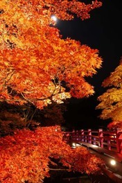 彌彦神社・弥彦公園 もみじ谷のライトアップ