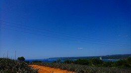 5日間の農山村ボランティア「若葉のふるさと協力隊」in沖縄