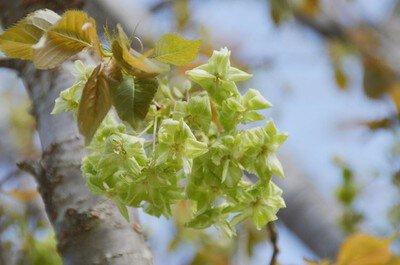 小田原フラワーガーデンの桜