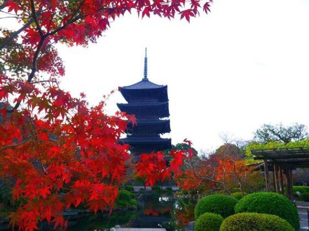東寺(教王護国寺)の紅葉