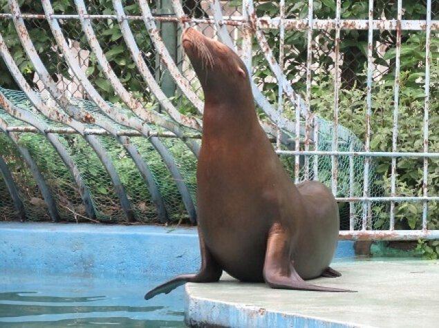 天王寺動物園 飼育の日イベント