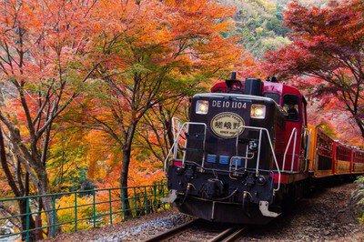 嵯峨野トロッコ列車の紅葉
