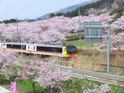 御所の台ふれあいパークの桜
