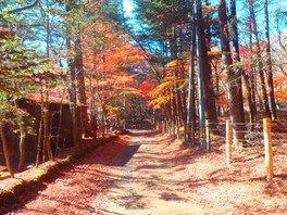 秋の軽井沢MTBサイクリング「うらみち探検ライド」 マウンテンバイク体験 自転車ツアー
