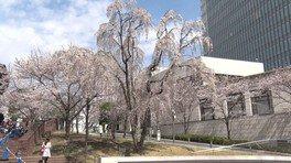 【一部施設休業】赤坂サカスの桜