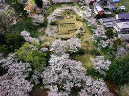 旧柳生藩陣屋跡の桜