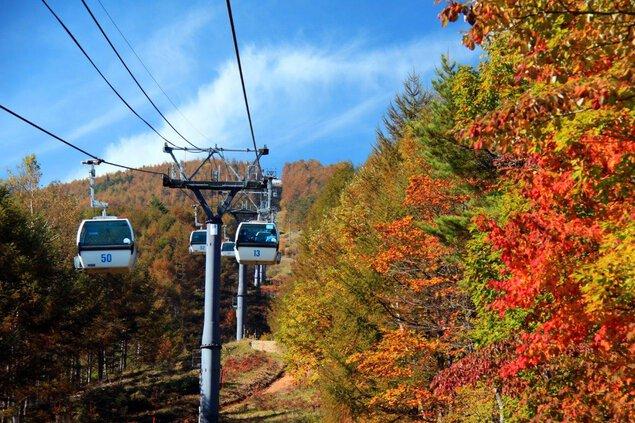 入笠山の紅葉