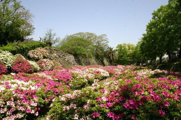 【花・見ごろ】和歌山城内