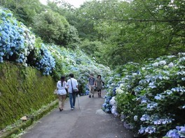 大阪府民の森ぬかた園地 あじさいまつり