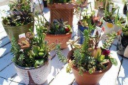 淡路島国営明石海峡公園 多肉植物の寄せ植え体験
