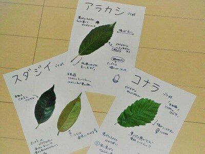 国営昭和記念公園 ネイチャープログラム~樹木の葉っぱ図鑑作り~