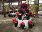 茨城県植物園 トロピカルクリスマス