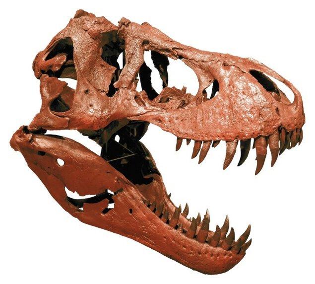 第80回企画展 化石研究所へようこそ!-古生物学のすすめ-