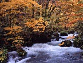 【紅葉・見ごろ】奥入瀬渓流