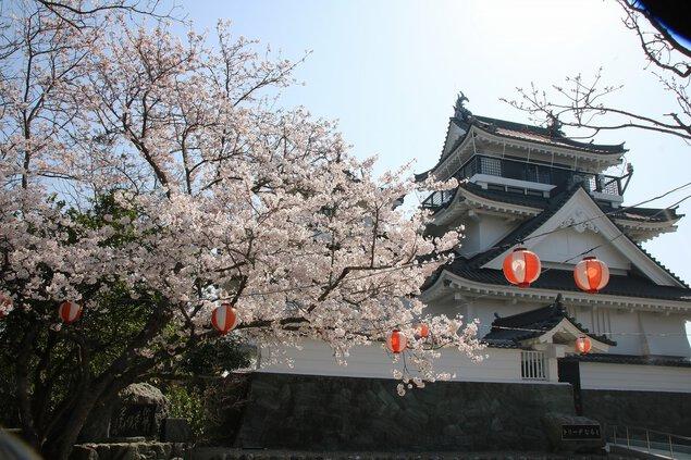 妙見山公園の桜