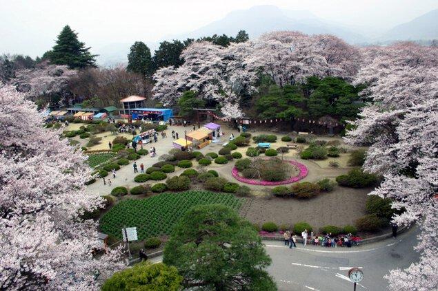 第32回沼田公園桜まつり
