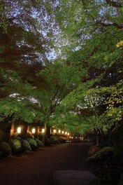 青葉ライトアップ 新緑の宴