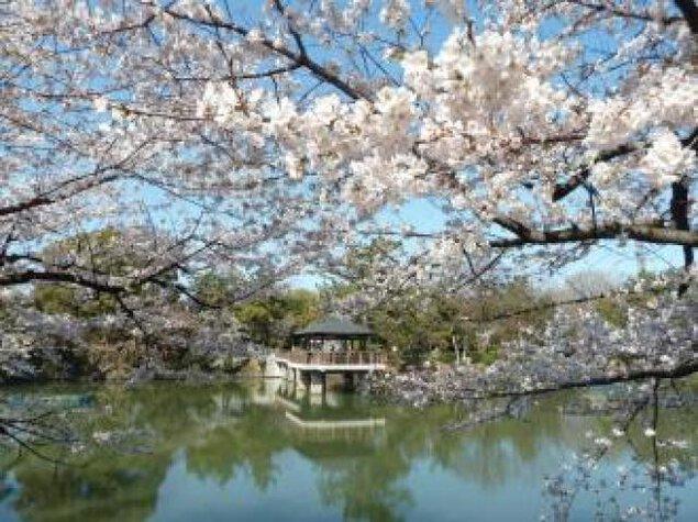 鶴舞公園 花まつり