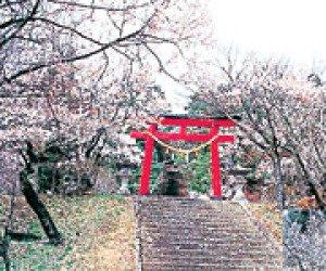 【桜・見ごろ】東照宮(旧松泰寺)境内