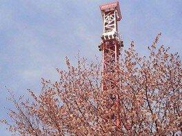 【桜・見ごろ】ルスツリゾート遊園地
